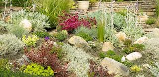 Plants in Landscaping